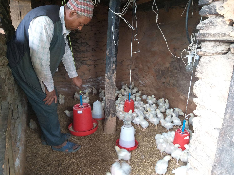 Arjun Kunmar in zijn pluimveehouderij